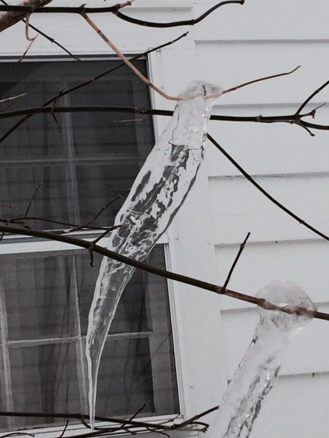 Bird Made of Ice or Ice Made of Bird?